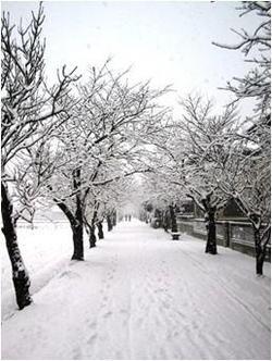 2004年12月31日雪景色の桜並木
