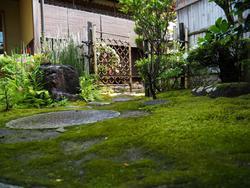 我が家の苔庭.jpeg