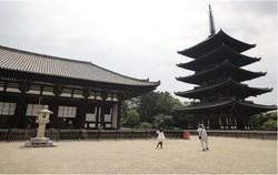 大人の修学旅行(興福寺)